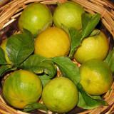 Citron bergamote ou Bergamotier