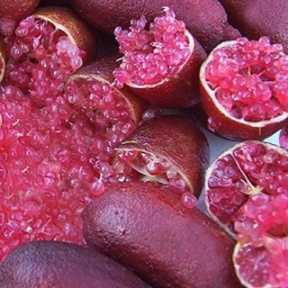 Citronnier caviar 'Mia Rose' - Microcitrus australasica 'Mia Rose'
